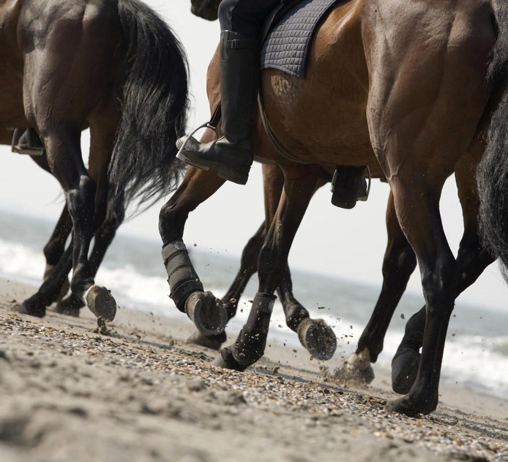 horses-maremma