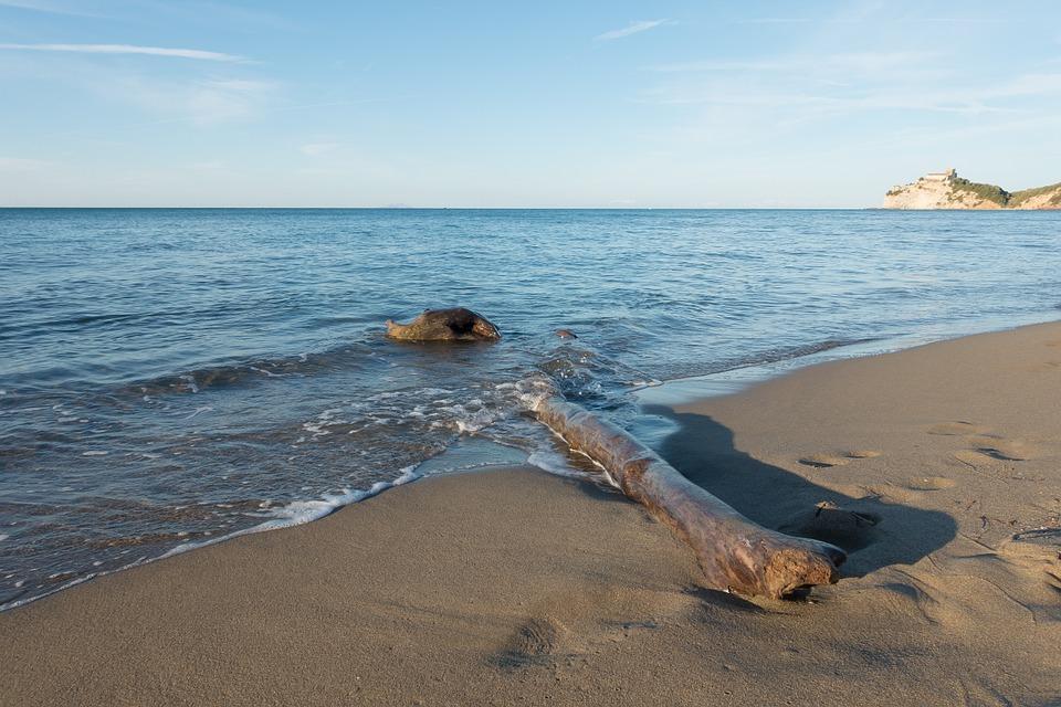 beach-974218_960_720